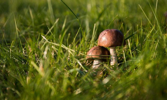 Gombát szedni ment az erdőbe, később holtan találták