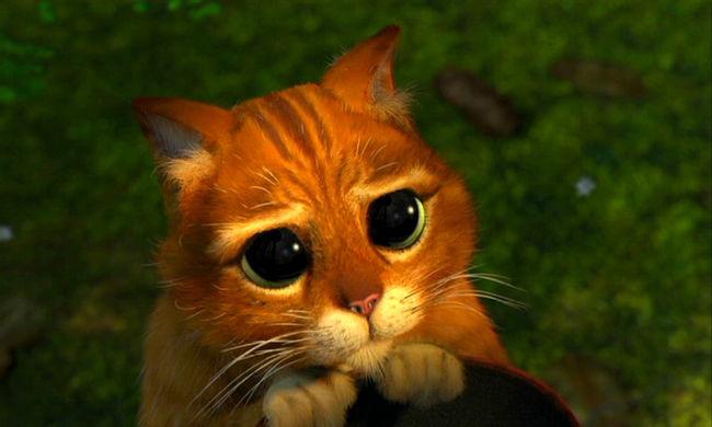 Miú-miújság - Kedvenc filmes macskáink