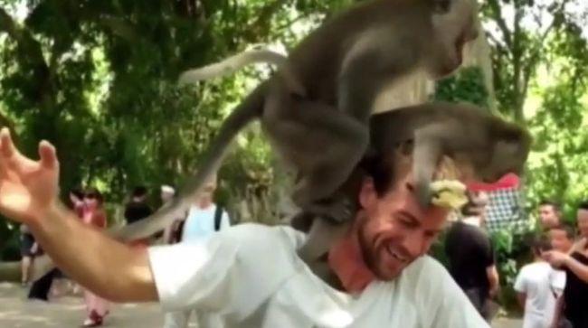 A turista banánt adott a majmoknak, hálából a fején szexeltek - videó