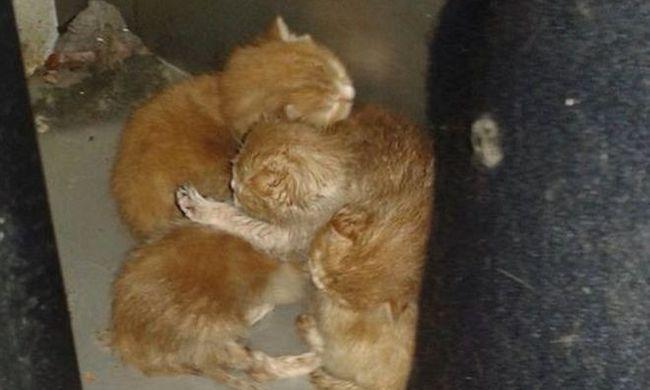 Újszülött kiscicákat találtak a szárítógépben