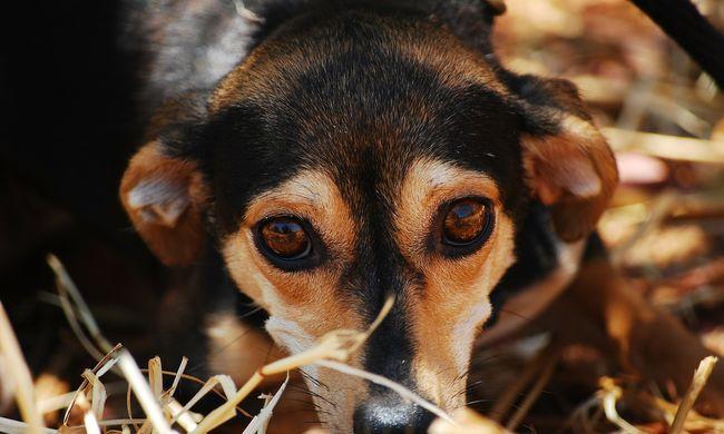 Irdatlan kegyetlenség: savval kínozták meg a tiszapalkonyai kutyát