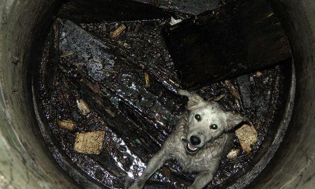 Csoda, hogy túlélte a zuhanást Molli, a kutya - fotók