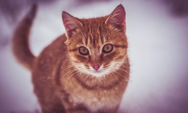Menhelyi macskától kapta el egy ember a madárinfluenzát
