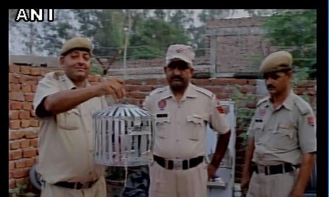 Ezért került rácsok mögé egy galamb Indiában, 3 fegyveres őrzi