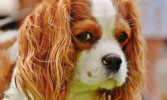 Forró vizet öntött a kutyára, mert zavarta