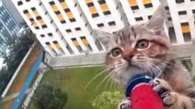12. emeletről pottyant ki a macska, de sikerült megmenteni - videó