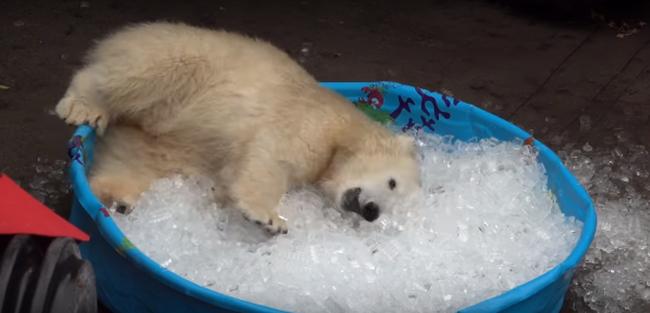 Jégnek így még sosem örültek - videó