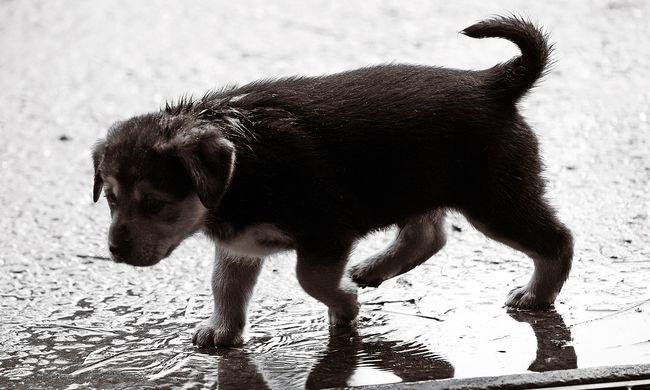 Halomra gyilkolta a kiskutyákat a kegyetlen magyar állatkínzó