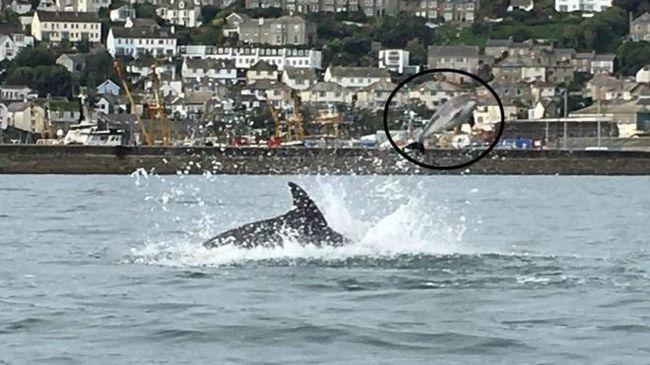 Szándékosan gyilkolt a delfin, de nem tudni, miért