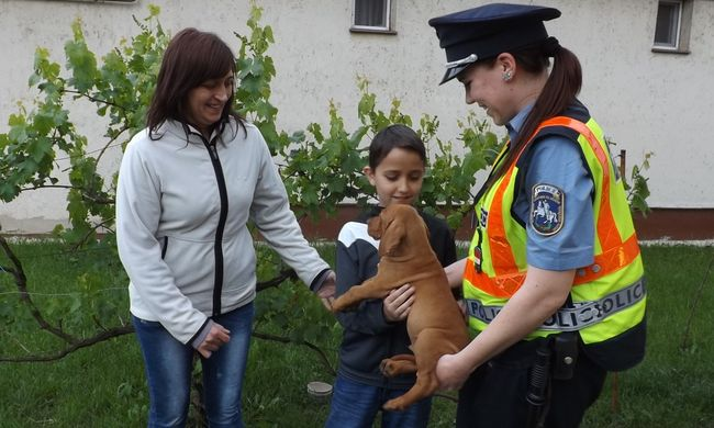 Kutyakölyköt loptak a tinik, mert megtetszett nekik