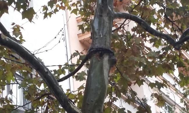 Fák fuldokolnak a Bartókon