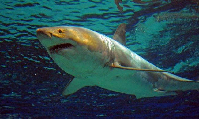 Durva videó: forgatás közben harapta meg a cápa a pornósztárt