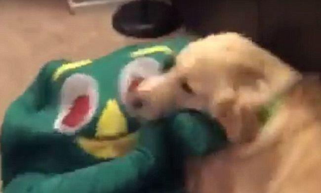 Megőrült a kutya, mikor gazdája a kedvenc játékának öltözött be - videó