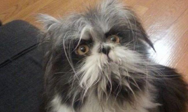 Ez most akkor kutya vagy macska?