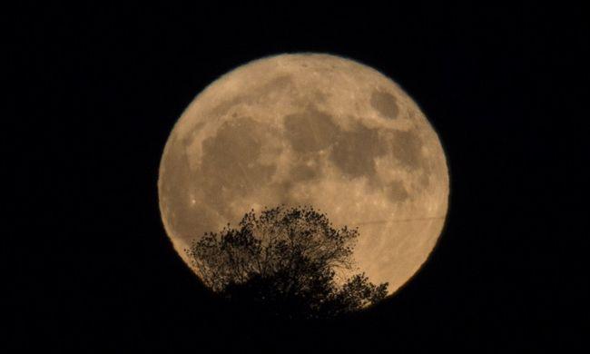 Ilyen még nem volt: virág nyílik a Holdon