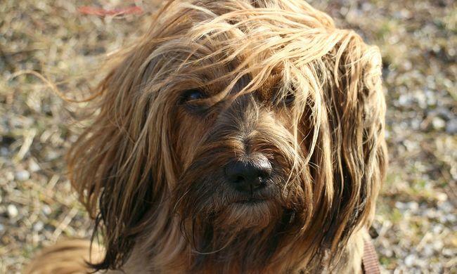 Megmérgezik a kutyákat Budapesten