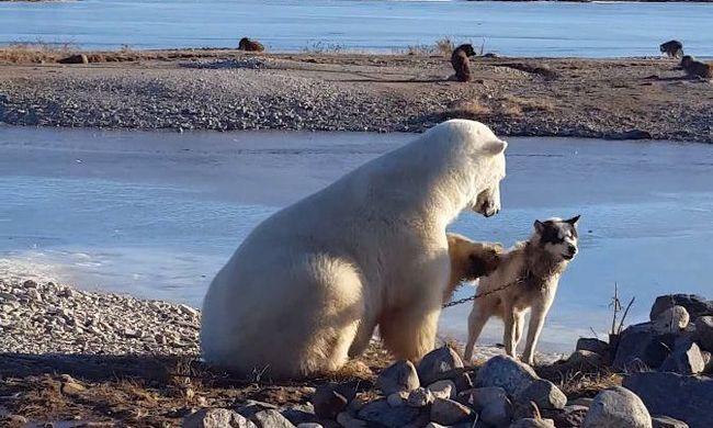 Ez a különös állatbarátság minden szívet megolvaszt - videó