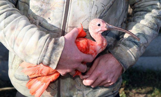 Nagy fogás: védett madarak százait tartotta fogva a magyar férfi
