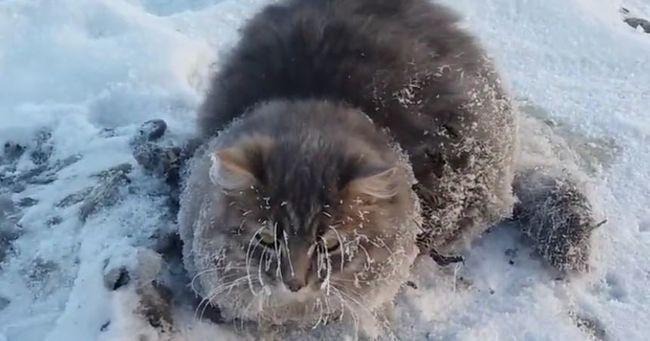 Alvás közben fagyott jégbe a macska, így menekült meg - videó