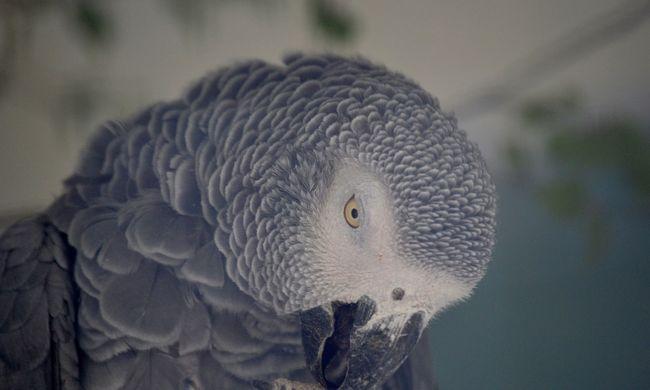 Arra ért haza a nő, hogy a papagája összevissza rendelt az interneten