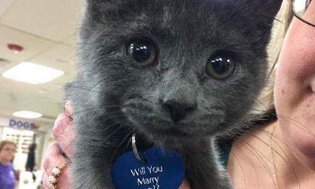 Mit szólna, ha ez a macska kérné meg a kezét?