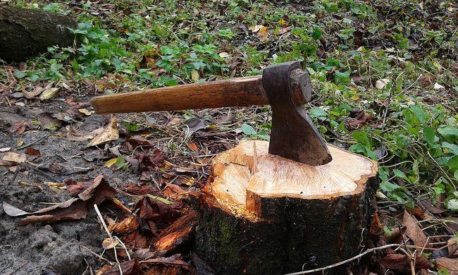 Agyonnyomta a fa a favágót