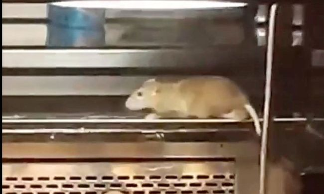 Patkánypáros rohangált a látványpékség szendvicsein - videó
