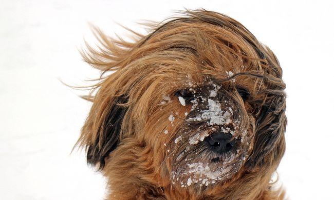 Kiadták a riasztást: hó, ónos eső és erős szél érkezik