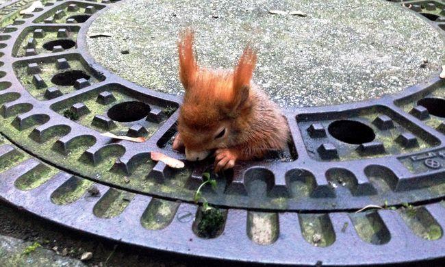 Olajjal kenték be a mókust, hogy kimentsék szorult helyzetéből