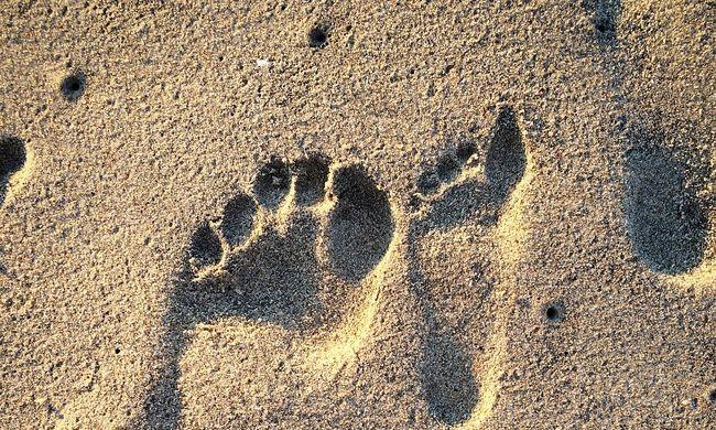 Emberelődök több millió éves lábnyomaira bukkantak a kutatók