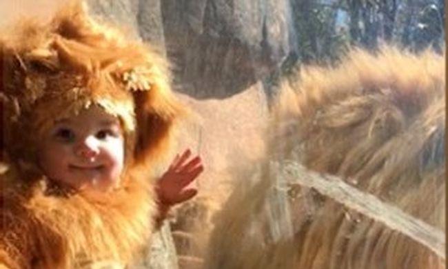 Ilyen, amikor egy oroszlánnak öltözött kisgyerek és egy valódi állat találkozik