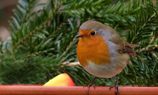 Így viselkednek a modern városoktól megbolondult madarak