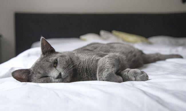 Újabb államban lesz tilos macskával szexelni