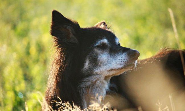 Csak a kutyáját kereste, de a 83 éves szomszédja lelőtte