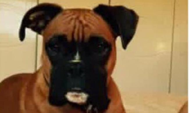 Eltűnt a kutya, váltságdíjat követelnek érte