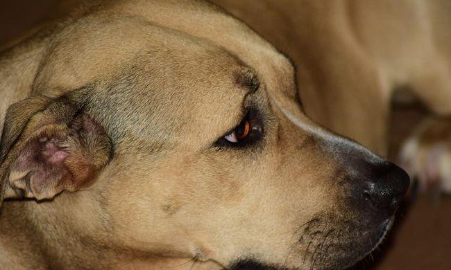 Éheztette a kutyáját, a saját kölykeit ette meg