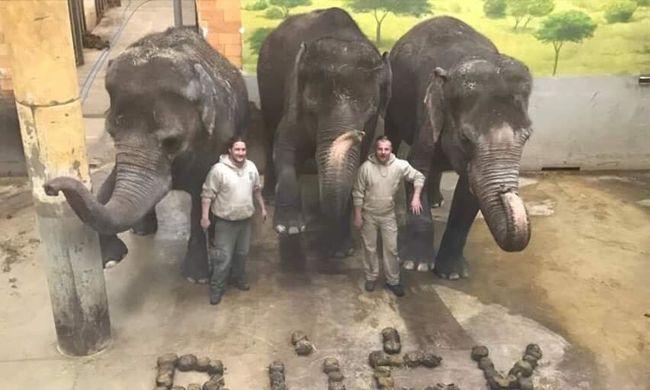 Elefántürülékkel köszöntötték az újévet a nyíregyháziak