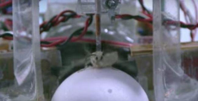 Lenyűgöző kísérlet: robotkocsit vezetnek a lepkék, ide küldik őket - videó