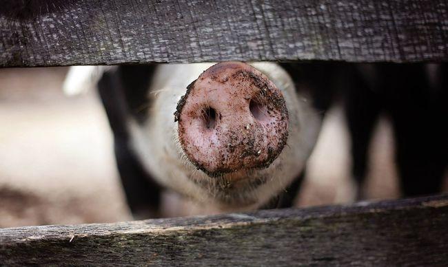 Fertőző húst hoztak Magyarországra, a határnál kapták el őket