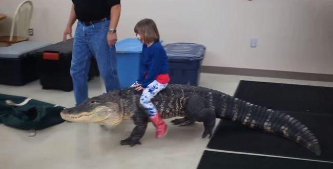 Aligátoron lovagol a kislány, a felnőttek a háttérből biztatják - videó