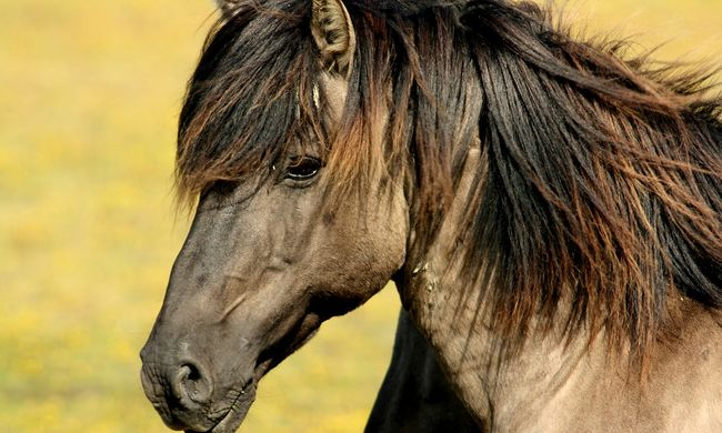 Meghalt egy rendőrségi ló, mert elfelejtették, hogy a pajtában van