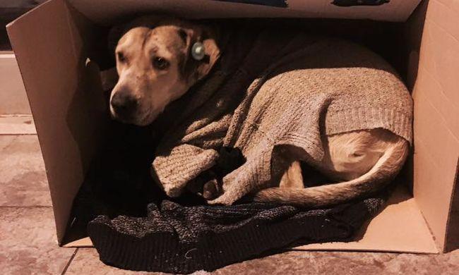 Emberségből jeles: azért nyitnak ki az üzletek, hogy megmentsék a kutyákat a fagyhaláltól