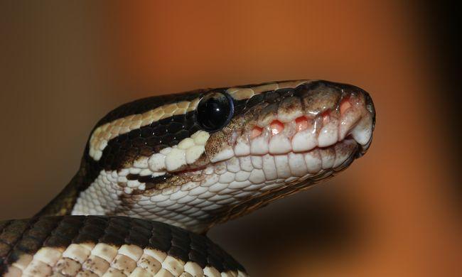 Óriási kígyót találtak a budapesti játszótéren, veszélyben voltak a gyerekek