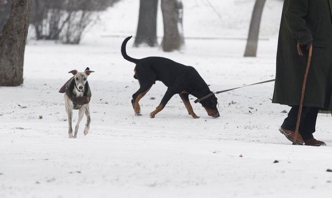 Emelték a riasztás fokozatát: hó, ónos eső és szélfúvás lesz