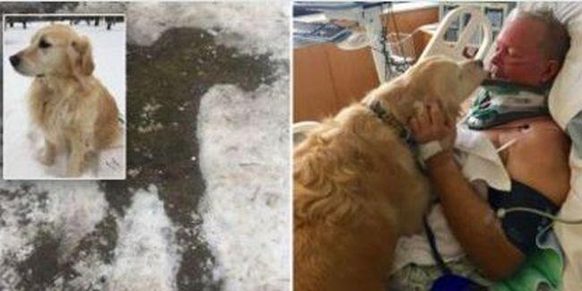 Tűzifáért indult, de eltörte a nyakát - kutyája mentette meg