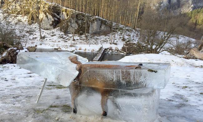 Fűrésszel vágták ki a Dunába fagyott rókát, ezt mondta a megtaláló