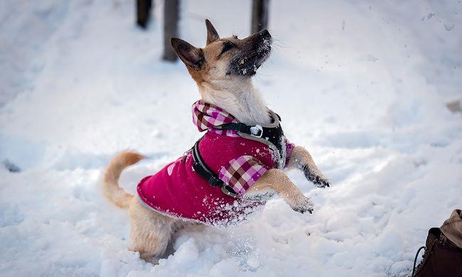 Keményebb lesz a tél: újabb lehűlés és hó tart felénk