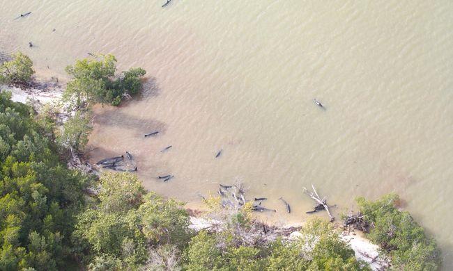 Tömeges pusztulás a tengerparton: 81 delfintetemet találtak