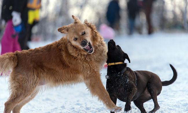 Szökött kutyák téptek szét egy férfit