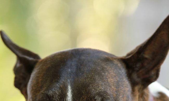 Kegyetlen gazda: falnak dobta a kutyáját, mert evett a gyereke ételéből